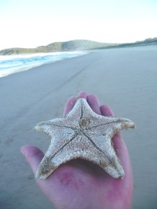 stella-marina-australia