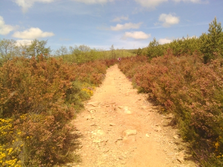 Il sentiero di oggi!