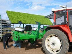 Agricultura in Australia