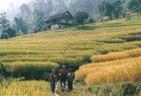 Campi di riso, Nepal