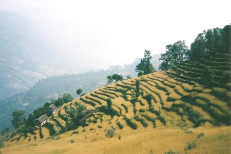 Montagne terrazzate, Nepal