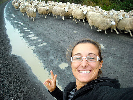 Elly on the sheeps, Pecore in Nuova Zelanda